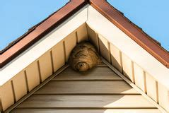wasps in siding of house siding stock photos images pictures 12 366 images