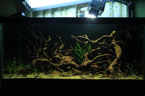 biotope aquascape aquascaping world competition gallery dragon imprint