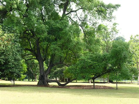 a picture of tree file 5 tree jpg wikimedia commons