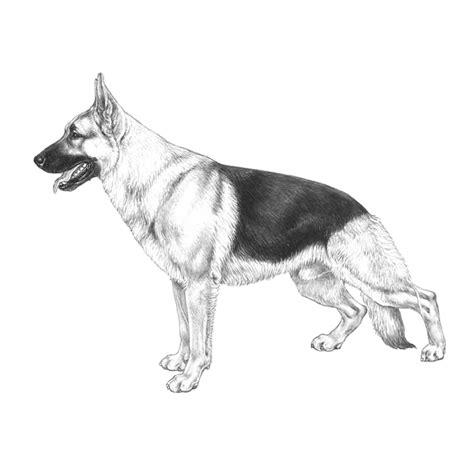 german shepherd puppies st louis articles dogwellnet