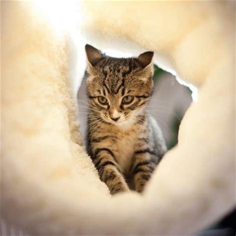 amache per gatti amaca da calorifero 2 in 1 rosewood zooplus