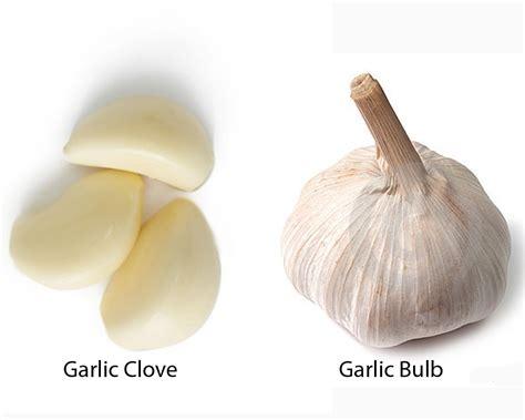 garlic clove vs bulb thosefoods com