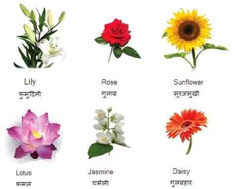garden flower names list flowers images and names savingourboys info