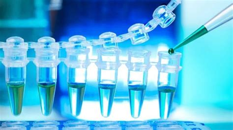 ingegneria biomedica sedi ingegneria biomedica percorso di studi e sbocchi