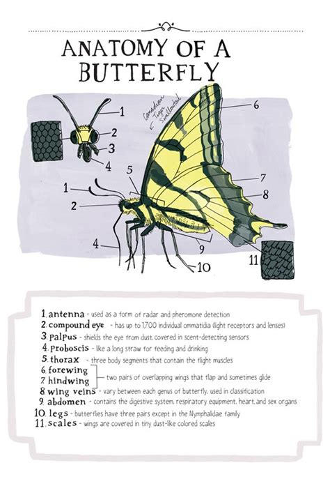 nature anatomy julia rothman nature anatomy a glorious illustrated love letter to curiosity and the magic of our world