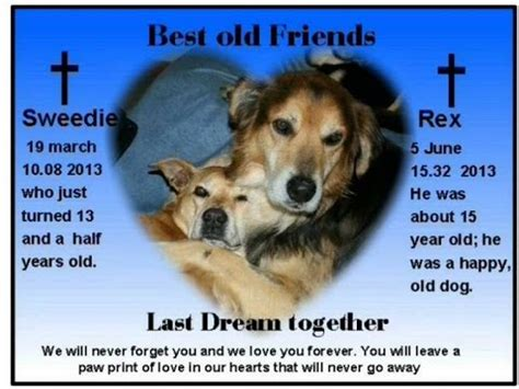 puppy died i lost rex my rescue he died in my arms i miss you my friend