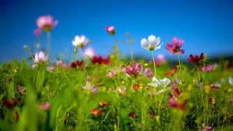 Wildflowers spring theme desktop themes windows wallpaper best 4k full