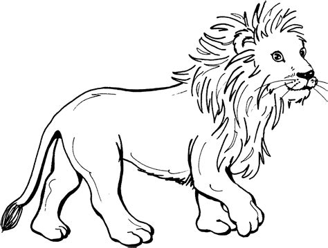 printable coloring pages lion about lions