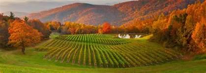Cottage Plan winery burntshirt vineyards hendersonville nc