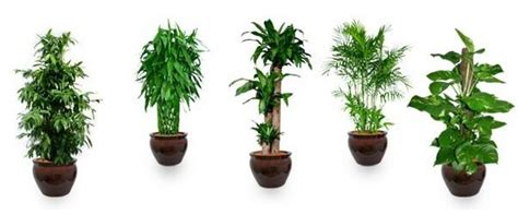 Desk Plants That Clean The Air by Office Cleaning Why Your Office Needs Air Purifying Plants