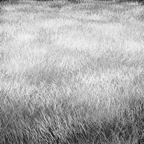 grass pattern drawing algorithmic art tyler hobbs texture study dormant grass