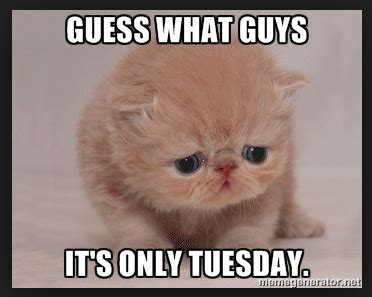 Tuesday Funny Memes - it s only tuesday meme morning coffee deals giggles