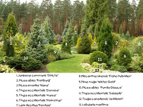 Conifer Garden Ideas Conifer Collection Conifers Pinterest Landscaping Gardens And Yards