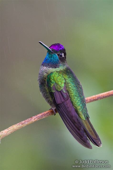 start birdwatching today enjoy the lord s paintbrush u