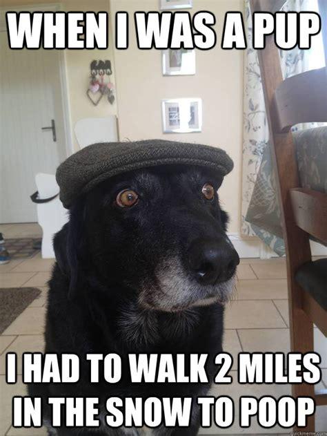 Dog Poop Meme - funny baby poop memes