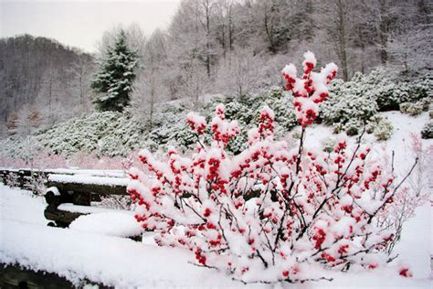 nc history of snowy christmas asheville nc photos decorations snow asheville nc mountain travel tips