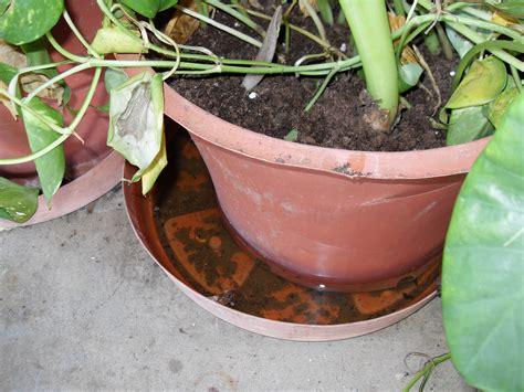 Standing Plant Medium resources for the media dengue cdc
