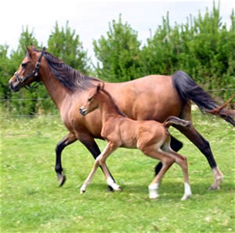 care of the newborn foal and mare horsetalk.co.nz