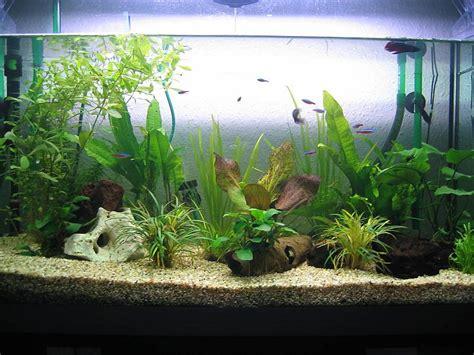 120 liter aquarium 4107 neues 120 liter becken aquarium forum