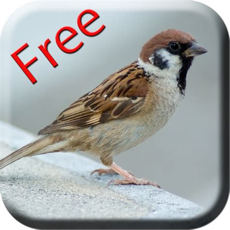 bird sounds amazon ca appstore for android