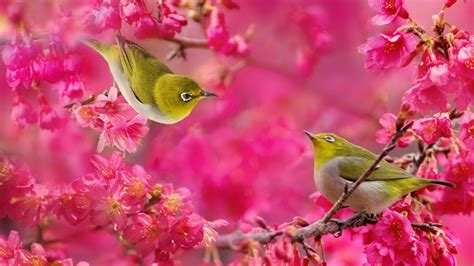 wallpaper flower bird birds and flowers birds wallpapers live hd wallpaper