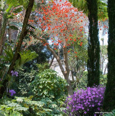 giardini la mortella ischia ischia news ed eventi dal 1 176 aprile riaprono al pubblico