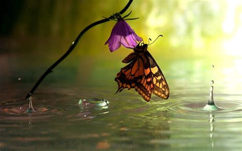 butterfly and flower on water new wallpaper hd