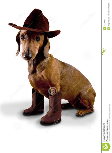 boots for dogs cowboy boots for dogs dress the clothes for your pets