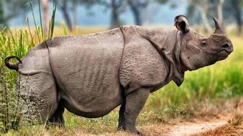 fauna asiatis pengertian ciri jenis tipe  gambar