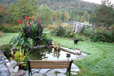 backyard landscape design water garden design