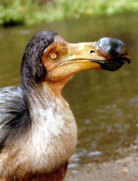 the dodo most endangered animals in the world general information