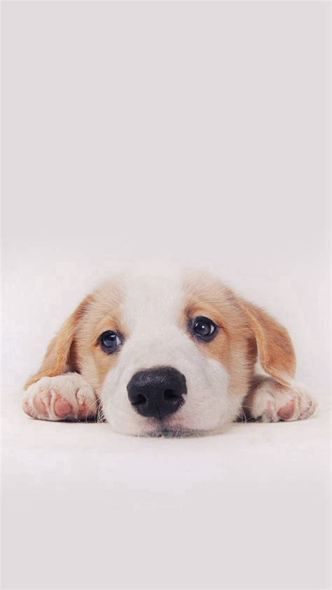 cute puppy android wallpapers for free puppy wallpaper free download that you get for background