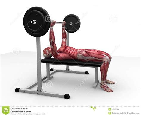workouts with bench press male workout bench press stock images image 15434794