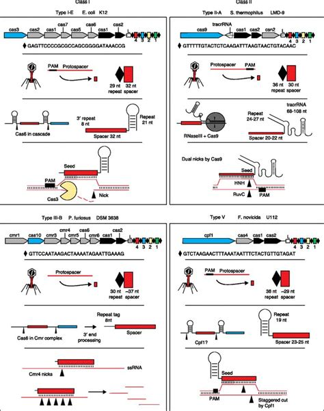 precision medicine crispr and genome engineering moving from association to biology and therapeutics advances in experimental medicine and biology books 158 best images about crispr precision genome editing on