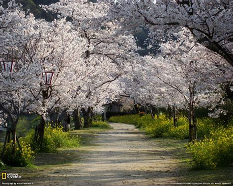 christmas wallpaper national geographic national geographic wallpaper spring scenes wallpapersafari