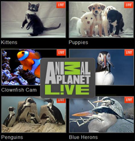 watch animal planet usa tv channel online streaming