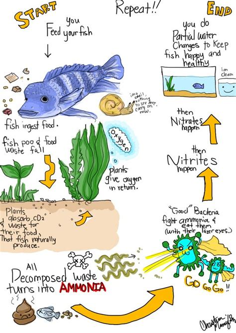 Do I Need To Cycle Tank If I Detox It by The Nitrogen Cycle For Everyone My Aquarium Club