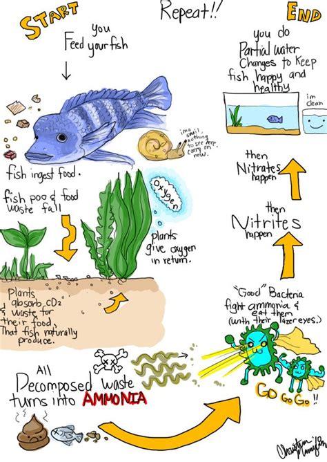fish cycle diagram the nitrogen cycle for everyone my aquarium club