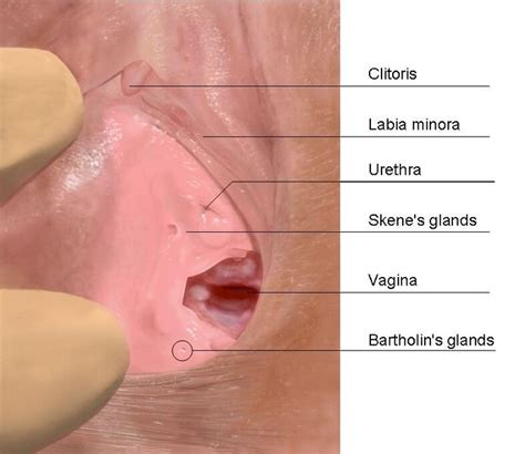 climaxing in a womens vigina top 5 questions about vaginal orgasm answered everyday