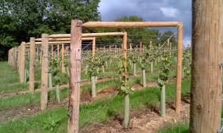 grape vine trellis 55 with grape vine trellis home