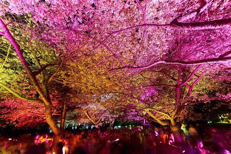 lights are us springs lights with modo modo