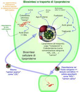 alimenti per colesterolo e trigliceridi alti trigliceridi alti cause terapia e prevenzione