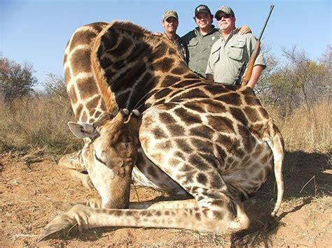 imágenes de jirafas bonitas una familia posa junto a una jirafa que han cazado por