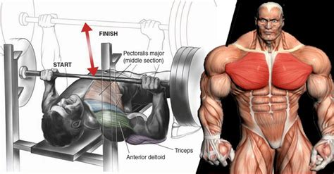 how to maximize your bench press how to maximize your gains on the bench press