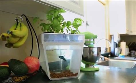 diy aqua farm diy aquaponics 5 best self watering organic aquaponic garden kits farming 4 change