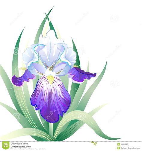 vector holidays card with iris flower stock photography