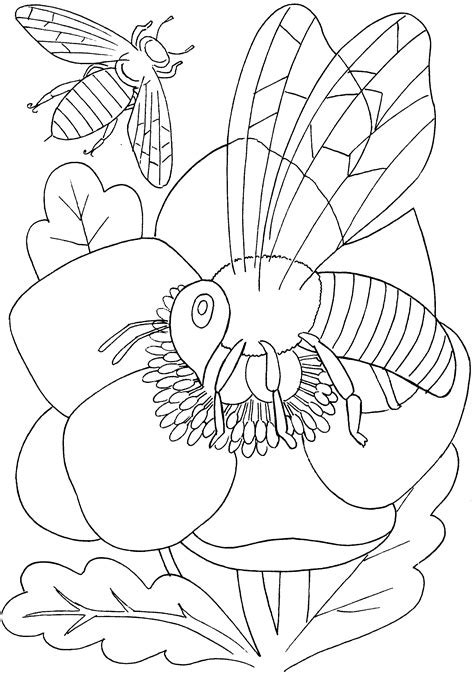 insect coloring pages pdf fantastic printable bugs coloring page with pages and