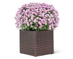 Aldi Planter Boxes by Aldi S Gardenline 3 Tier Planter Flower Pots Planters