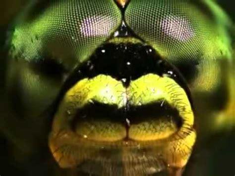 my macro insects and arachnida photo gallery | neezhom