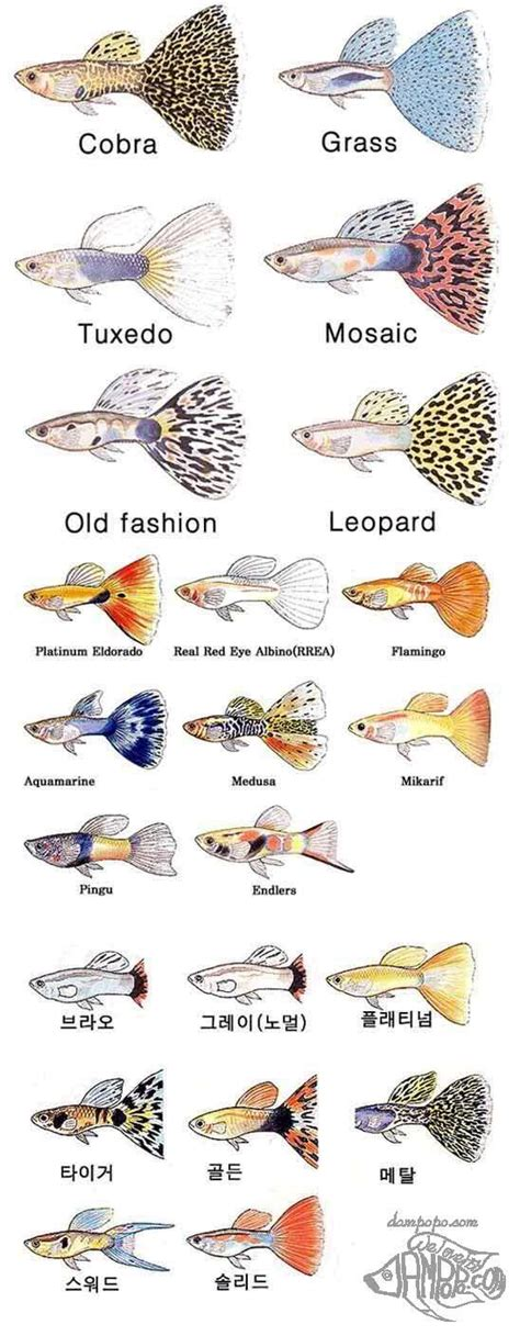 guppies colors the world s catalog of ideas